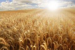 Sun sopra un giacimento di grano Fotografia Stock