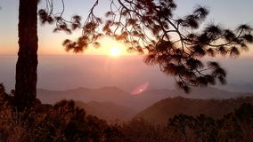 Sun sous le pin photographie stock