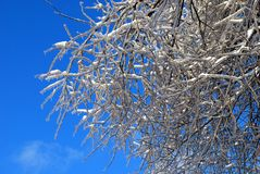 Sun sparkled the tree branch in ice Royalty Free Stock Photo