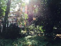 Sun-spider`s web. There is a well-played job with sunlights to highlight this vision of everyday : a spider`s web in a Park in Brussels Stock Photo