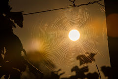 Sun Spider Web. The sun sits in the center of a spider web Stock Photo