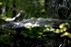 A sun is in a spider web Royalty Free Stock Photos