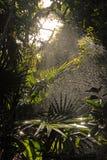 Sun Splashed. Sun and water splashing on palms Royalty Free Stock Image