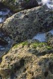Sun-splende sul resti dei funghi sulle rocce Mar Rosso Jedda Immagine Stock Libera da Diritti