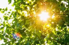 Sun tramite le foglie Fotografie Stock Libere da Diritti