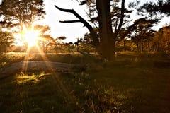 Sun star throungh the tree Royalty Free Stock Photos