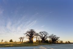 Sun starburst at Baines Baobab trees stock images