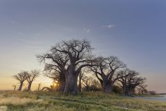 Sun starburst at Baines Baobabs Royalty Free Stock Photos