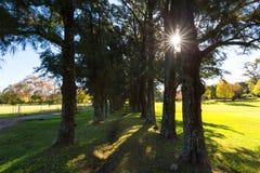 Sun Starburst par les arbres Photo stock