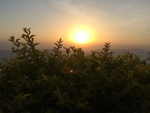 Sun-Steigen natürlich Stockbild