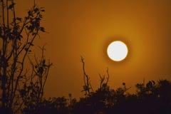 Sun stellte von meiner Dachspitze ein! Schattenbild eines Baums Stockfotografie