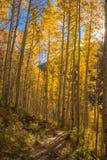 Sun-Stern und Aspen Trees auf Colorado-Spur Stockbilder