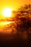 Sun stigning Arkivfoto