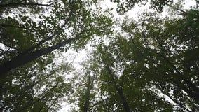 Sun strålar till och med treesna lager videofilmer