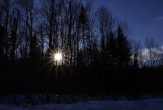 Sun strålar till och med treesna Royaltyfri Bild