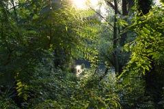 Sun-Strahl auf grünem Wald nahe dem Fluss Adda in Nord-Italien lizenzfreie stockfotografie