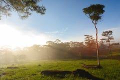 Sun-Strahl auf Gras am Wald. Stockbilder