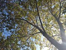 Sun-Strahl, der durch Herbstniederlassungen überschreitet Lizenzfreie Stockfotos