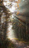 Sun-Strahlen Lizenzfreies Stockbild