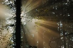 Sun-Strahlen Stockfotografie