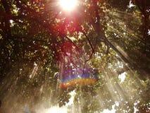 Sun-Strahlen Stockfoto