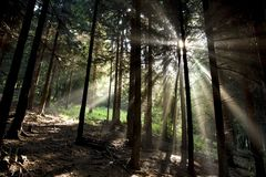 Sun-Strahlen Lizenzfreie Stockfotografie
