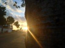 Sun-Strahlen auf einem Baum lizenzfreies stockfoto