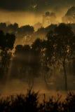 Sun-Strahlen in den Bäumen Lizenzfreie Stockfotografie