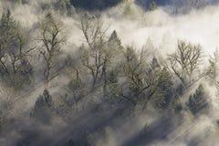 Sun-Strahlen, die durch den Nebel im Wald strahlen Lizenzfreies Stockbild