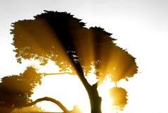 Sun-Strahlen, die durch ein Tre strahlen Lizenzfreie Stockfotos