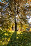 Sun-Strahlen durch Bäume im Herbst stockbild