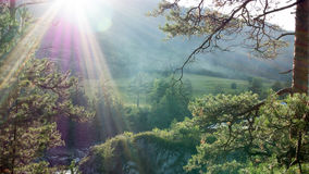 Sun-Strahlen durch den Kiefernwald Lizenzfreie Stockfotografie