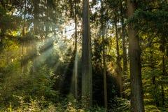 Sun-Strahlen durch den Wald Lizenzfreies Stockfoto