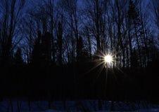 Sun-Strahlen durch die Bäume Lizenzfreie Stockfotos