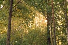Sun-Strahlen durch Laub lizenzfreie stockbilder