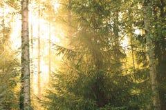 Sun-Strahlen durch Laub lizenzfreie stockfotografie