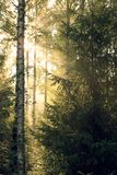 Sun-Strahlen durch Laub stockbild