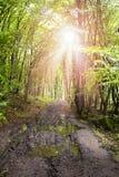 Sun-Strahlen durch Waldbl?tter stockfoto