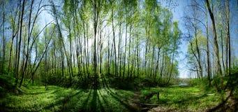 Sun-Strahlen im Sommerwald Lizenzfreie Stockfotos