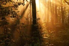 Sun-Strahlen im Wandwald Stockfotos