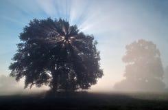Sun-Strahlen am nebelhaften Morgen Stockfotos