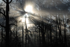 Sun-Strahlen und Bäume Lizenzfreies Stockbild