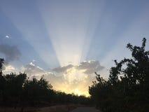 Sun-Strahlen zwischen an der Dämmerung Lizenzfreies Stockfoto