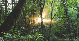 Sun-Strahlnglanz durch den Wald Lizenzfreies Stockfoto