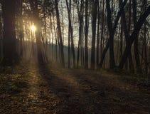Sun strahlt das Glänzen durch die Bäume aus Lizenzfreies Stockfoto