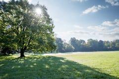 Sun strahlt das Glänzen durch die Krone eines großen Baums Stockfoto