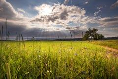 Sun strahlt das Glänzen durch die Wolken auf der Wiese aus Lizenzfreie Stockfotografie