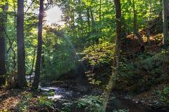 Sun strahlt das Glänzen durch grüne Blätter auf einem Fluss aus Stockbilder