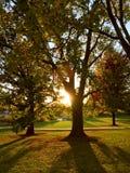 Sun strahlt das Glänzen durch große Bäume am späten Nachmittag aus stockbild
