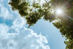 Sun strahlt das Glänzen durch Niederlassungen des grünen Baums und des blauen Himmels aus Lizenzfreie Stockfotos